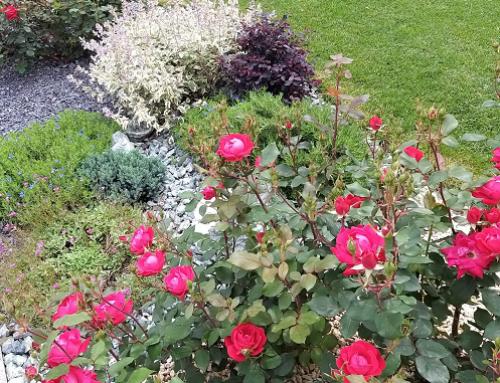 Giugno il mese dei colori in giardino