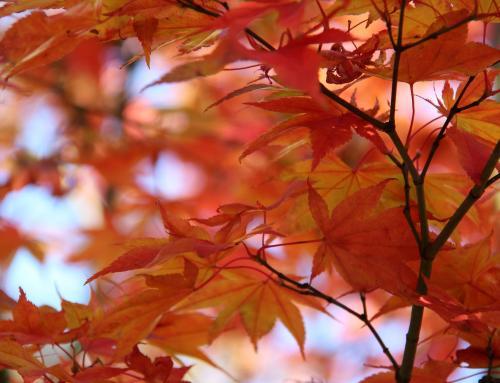Il giardino a novembre