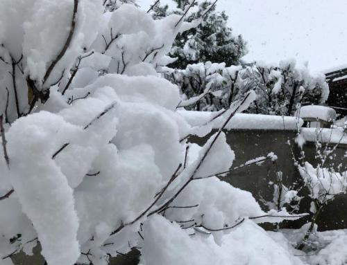Neve in Giardino – Consigli per ottimizzare gli effetti  ed evitare i danni