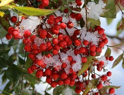 A dicembre fate un regalo al vostro giardino. Dopotutto è il mese del Natale!