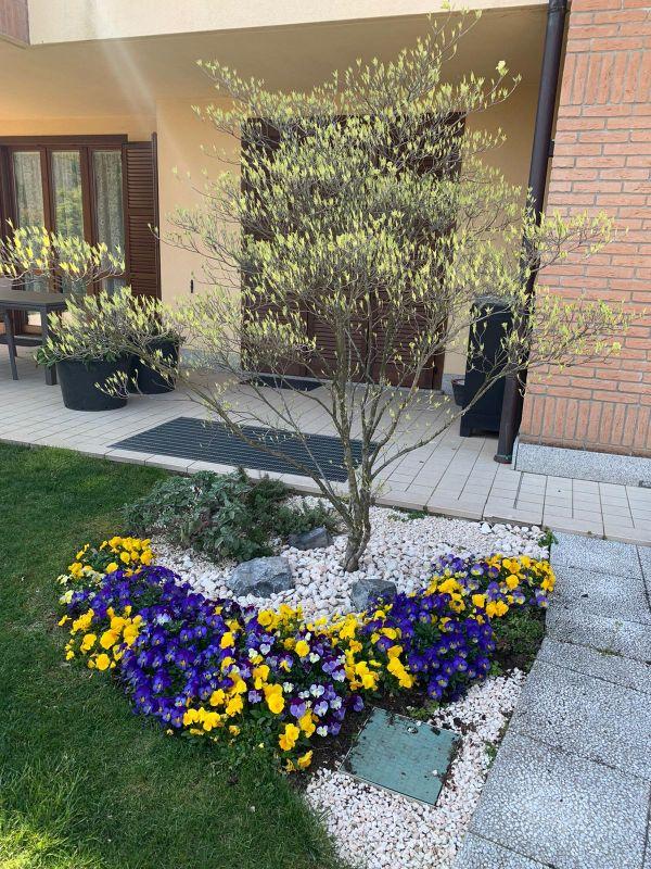 aiuola fiori viola e gialli