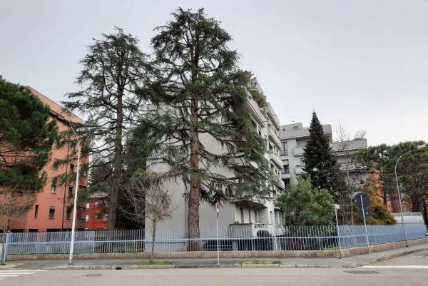 potatura alberi condominio