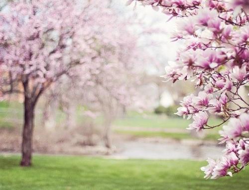 Marzo: il Mese che segna l'Arrivo della Primavera