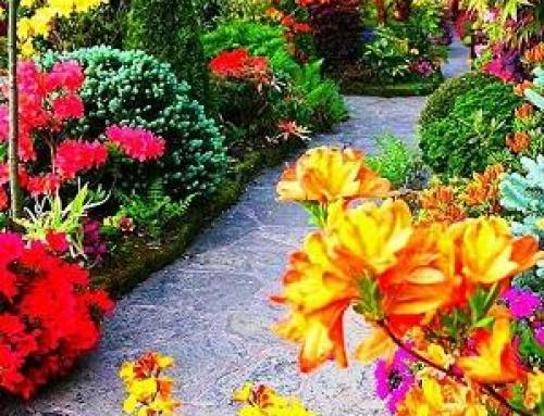 GIUGNO – Ecco esplodere i colori nei vostri giardini!