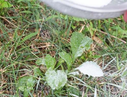 Come eliminare le erbe infestanti